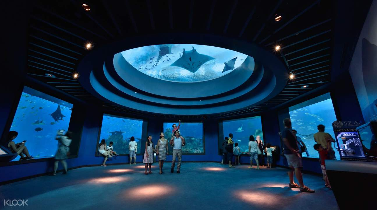 a section of the S.E.A. Aquarium with views of manta and sting rays
